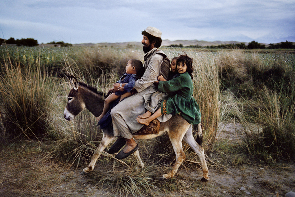 Steve McCurry. Animals.