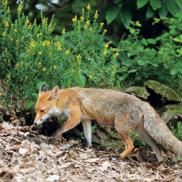 Animali e natura gli strumenti per fotografarli
